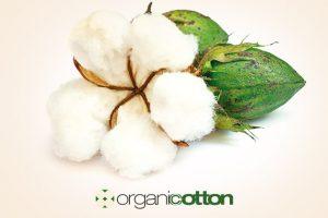 organic-cotton-570x400